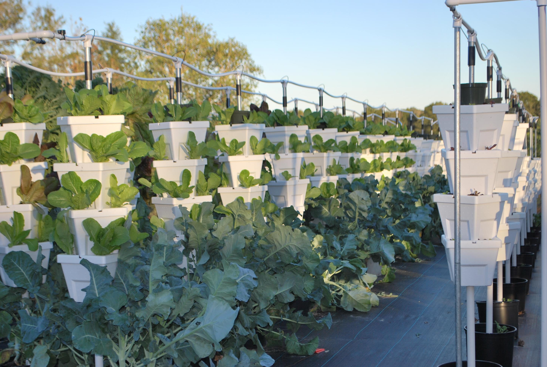 backyard food solutionsbackyard food solutions local hydroponic