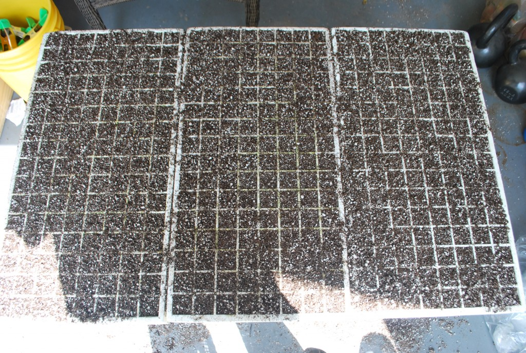 Tray filled with planting mix
